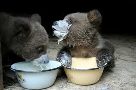 babybears