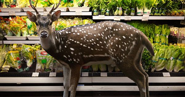deeringrocery