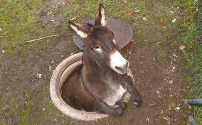 donkeyinahole