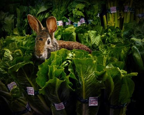rabbitbyarganharahap