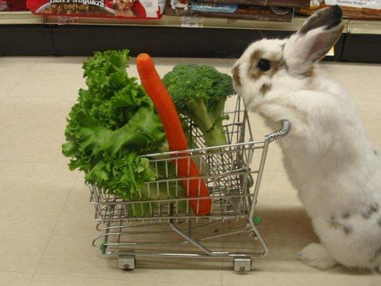 rabbitingrocerystore
