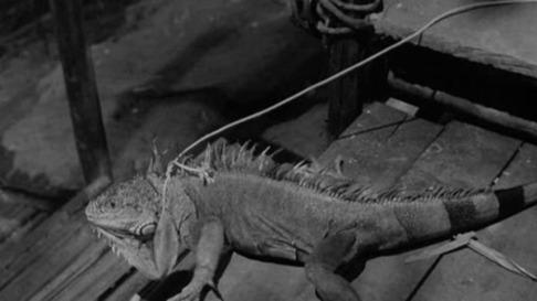 856full-the-night-of-the-iguana-screenshot.jpg