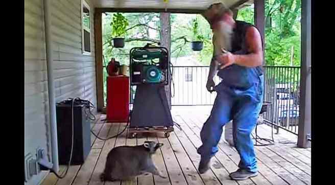 raccoon-dance-1136x628.jpg