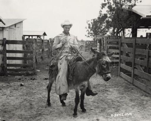 cowboyondonkey.jpg