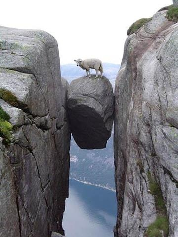 da56f951026d9a298df0303850e2ab24--stuck-mountain-goats.jpg
